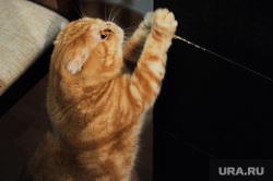 Гадание на ВИПьё. Челябинск, кот, котик, домашнее животное