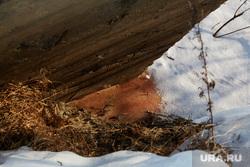 Последствия предполагаемого  выброса химикатов в реку Молчанку. Деревня Молчаново. Тюменский район