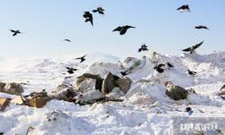Клипарт. Челябинская область, мусор, помойка, зима, птицы, свалка