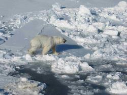 Турция, стамбул, арктика, холод, лед, пейзаж, океан, белый медведь, арктика, снег, айсберг