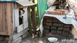 Поселок Октябрьский: разрушения. Донецк, собака, домашние животные, будка