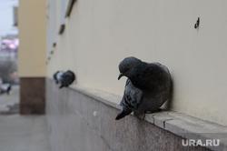 Пыльный грязный Екатеринбург. Город без снега, голубь, городские птицы