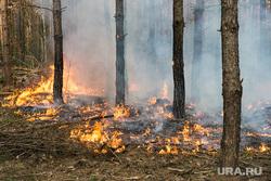 Космос, планеты, лесные пожары, ураган, природные катаклизмы, экология, пламя, дым в лесу, лесные пожары, огонь, пожар, тушение пожара, пожарник, пожарный, природа, деревья горят