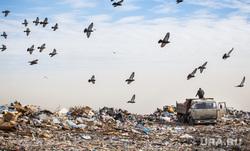 Полигон ТБО и цех сортировки. «Спецавтобаза». Екатеринбург, мусор, камаз, птицы, спецтехника, мусоровоз, грузовик, гора, отходы, хлам, лка, тбо, самосвал, куча, окружающая среда, голуби, свалка, экология, отбросы, помои