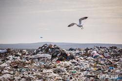 Полигон ТБО и цех сортировки. «Спецавтобаза». Екатеринбург, мусор, птицы, свалка, лка, тбо, чайка