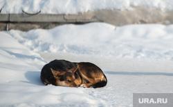 Клипарт. Собаки. ДТП и др. Екатеринбург, бездомные животные, бродячие собаки