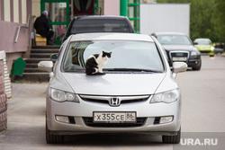 Клипарт new. Нижневартовск., кот, кошка на машине, наглость