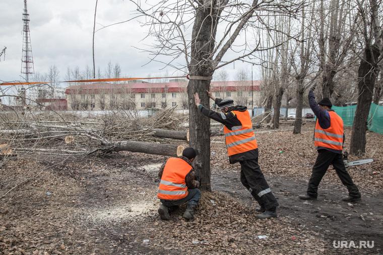Вырубленный парк, на месте которого планируют построить бизнес-центр. Тюмень, спиленные деревья, рабочие