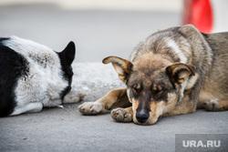 Клипарт, бездомные животные, бродячие собаки, дворняги