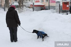 Куса. Челябинская область, сугроб, собака