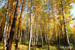Осенняя природа, разное Курган, осенний лес