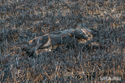Обгоревшие трупы собак. Курган, пожарище, пепелище, труп собаки, обгорелое животное