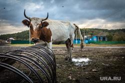 Клипарт. Декабрь (Часть 1). Магнитогорск, деревня, корова, утро, тучи, сельская местность, горы