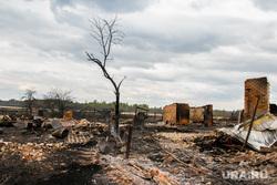 Сгоревшие сельские дома. Мыркайское, пожарище, пепелище, чп, сгоревшие дома, сгоревшее дерево