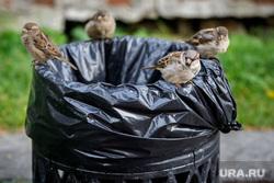 Черные выходы ресторанов. Екатеринбург, воробьи, птицы, мусорка, урна