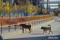 Поселок Тазовский, Новый Уренгой, Ямало-Ненецкий автономный округ, тротуар, бездомные животные, проезжая часть, бродячие собаки, стая собак