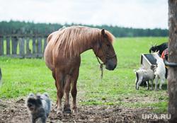 Многодетная семья фермеров из Нижнего Тагила. Свердловская область, деревня Черемшанка, сельское хозяйство, лошадь, ферма, поле, деревня, природа, скот, домашнее животное, пони, село, сельская местность, животноводство