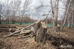 Вырубка парка на пересечении улиц Республики и Пермякова. Тюмень , спиленные деревья, пни