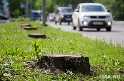 Вырубка деревьев на тихом Компросе. Пермь, пенек, пеньки, вырубка деревьев