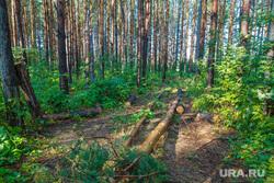 Рабочая поездка по городу. Екатеринбург, дрова, сосны, деревья, лес, вырубка леса