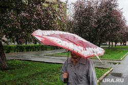 Дождь, непогода. Челябинск, погода, климат, весна, непогода, дождь, зонт, яблони цветут
