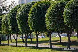 Клипарт, разное. Екатеринбург, аллея, деревья, озеленение города