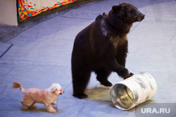 Торжественное открытие Нижнетагильского государственного цирка после реконструкции. Свердловская область, Нижний Тагил , цирк, арена, медведь, собака, животное, шоу