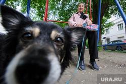 Виды Екатеринбурга, собачка, выгул собак, женщина, бабушка, качели