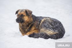 Стрежевская переправа. Излучинск., бездомные животные, холод, зима, бездомная собака