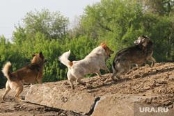 Депутатские комиссии гордумы по экономической политике и развитию городского хозяйства Курган, собаки, бездомные животные