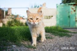 Поселок Октябрьский: разрушения. Донецк, кот, домашние животные
