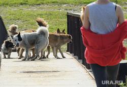 Виды Верхней Салды, пешеходный мост, стая собак, собака, бродячие животные