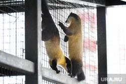 Челябинский зоопарк. Разная скотина.Челябинск., харза уссурийская