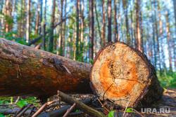 Рабочая поездка по городу. Екатеринбург, дрова, бревна, лес рубят, вырубка леса