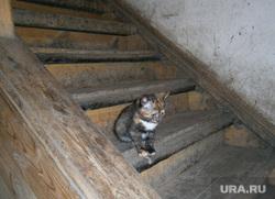 Аварийный дом по ул. Гастелло 55. Тюмень., бездомные животные, котенок, лестница