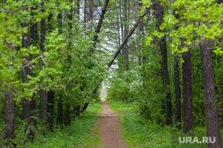 Шарташский лесопарк. Каменные палатки. Екатеринбург, лес, парк, дерево упало, лесопарк шарташский
