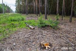 Незаконные выделения земельных участков под строительство в Кетовском районе. Лесниковский сельсовет, кетовский район, вырубленные деревья, просека в лесу