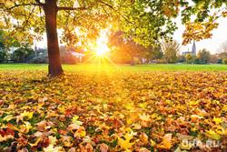 Работа руками, айфон 8, скорая помощь, солнце, солнечный свет, листва, бабье лето, желтые листья, солнце, золотая осень, осеннее солнце, солнышко