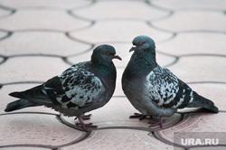 Интервью с протоиереем Петром Мангилевым. Екатеринбург, голуби, птицы
