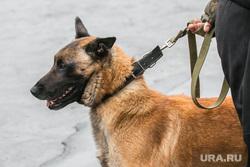 День пограничника. Курган, пес, служебная собака, зубы, злая собака, клыки, агрессия