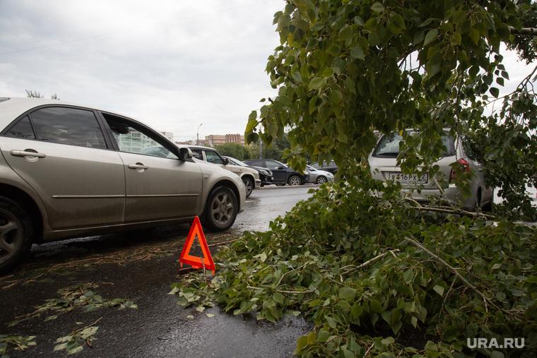 Упавшие деревья после урагана. Тюмень, знак аварийной остановки, упавшее дерево, дерево упало на машину