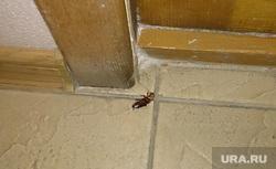 Клипарт. Челябинск., таракан, насекомые, антисанитария
