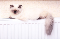 Клипарт depositphotos.com, кот, тепло, отопление, домашнее животное, отопительный сезон, уют, котики на батарее