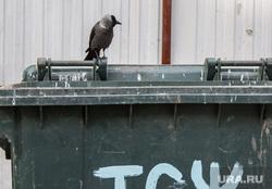 Разное. Курган, помойка, мусорный контейнер, тсж, городские птицы, галка, мусорка