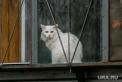 Субботник, разное. Курган, кошка, кот на окне, белый кот