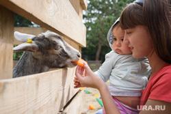 Ресторан Donna Olivia. Екатеринбург, коза, контактный зоопарк, домашнее животное, козел