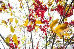 Верхотурье, Меркушино, Актай, Свято-Косминская пустынь., рябина, осень