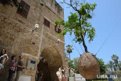 Виды Тель-Авива, Ашдода, Иерусалима. Израиль, туризм, апельсиновое дерево, израиль, тель-авив, старый яффо, улица мазаль арье, достопримечательности тель-авива