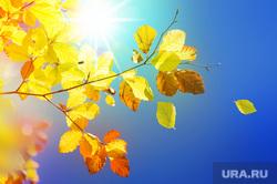Клипарт depositphotos.com , солнечный свет, бабье лето, желтые листья, солнце, осеннее солнце, солнышко