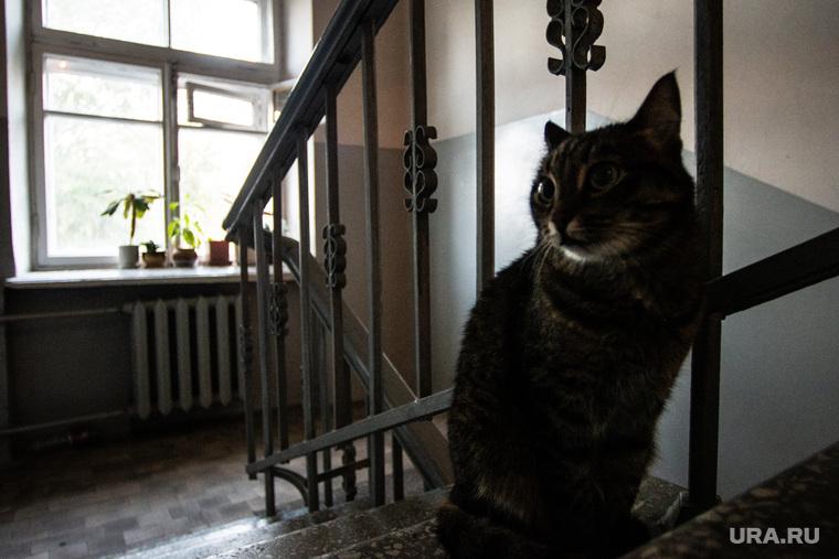 Дом возле свердловской филармонии. Екатеринбург, кошка, кот, подъезд, лестница
